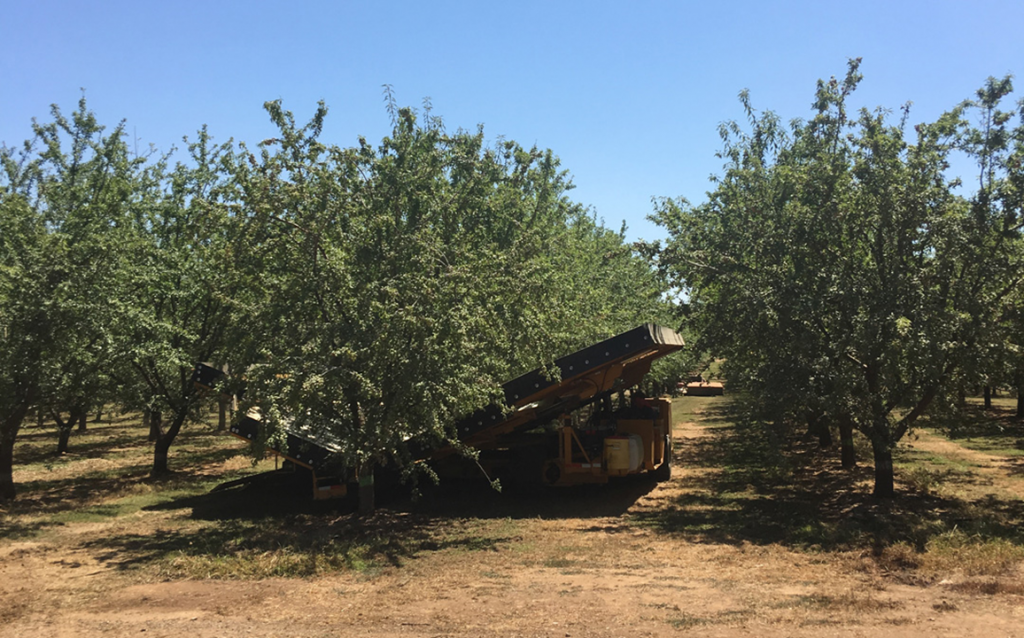 Catch frame shaker in a mature almond orchard.