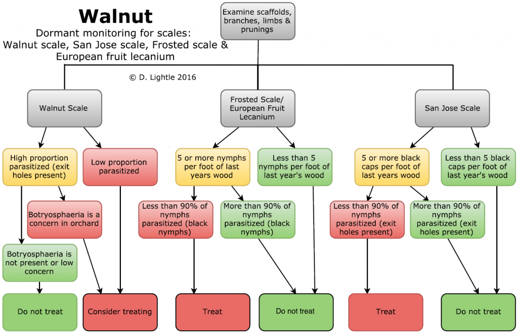 Decision tree for making treatment decisions of walnut scale, San Jose scale, and frosted scale.