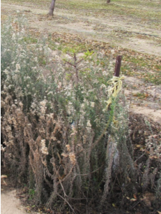 Weeds can outcompete trees for sunlight, water and nutrients.