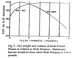 Dry weight and volume of fresh French prunes in relation to flesh firmness. Optimum harvest would be done when flesh firmness is 3 to 4 pounds.
