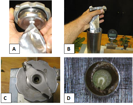Figure 2. Basic process of measuring midday SWP with a pressure chamber. (A) Bagged leaf is excised from the tree and the stem is inserted through the pressure chamber cap. (B) Bagged leaf is placed into the pressure chamber. (C) A long stem should protrude through the top of the chamber. (D) Water will exude from the surface of the cut stem and the surface will glisten when the endpoint is reached. Photos: A. Fulton and K. Shackel.