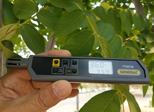 Example of simple thermo-hygrometer pen hung in lower tree canopy. There are many brands available online. In this example the walnut orchard temperature is 95.9°F and 36.0 percent relative humidity. Using table 2, this equates to a baseline SWP of approximately -5.2 bars.