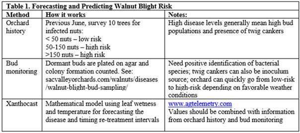 Walnut Blight Management