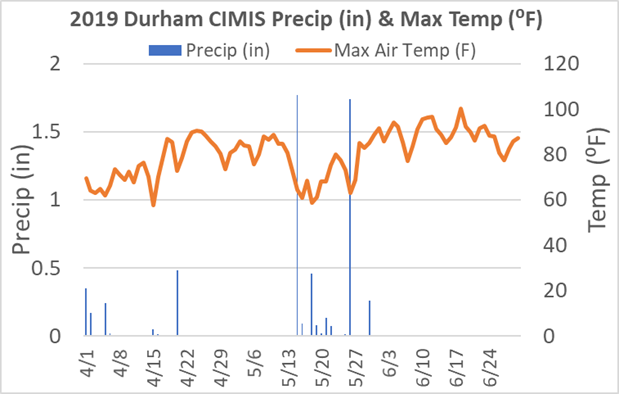 Figure 1. Precipitation (inches) and maximum air temperature (⁰F) at the Durham, CA CIMIS station from April through June 2019.