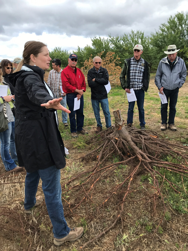 Photo 4. Astrid Volder, a UC Davis Plant Sciences Professor with expertise in roots, discussed the latest finding on irrigation and root health in California tree crops in an episode of Growing the Valley podcast. (https://www.growingthevalleypodcast.com/podcastfeed/roots)