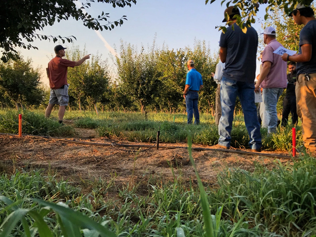 Photo 3. Franz Niederholzer (UCCE Colusa, Sutter-Yuba) stands in a clearing left by the mortality of a bacterial canker hot spot at the UC Yuba rootstock plot and points participants in a 2018 field meeting to the healthy and vigorous surrounding rootstock treatments (photo: Luke Milliron).