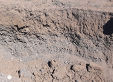 Figure 4. Layered orchard soil considered for soil modification and/or zone irrigation management.