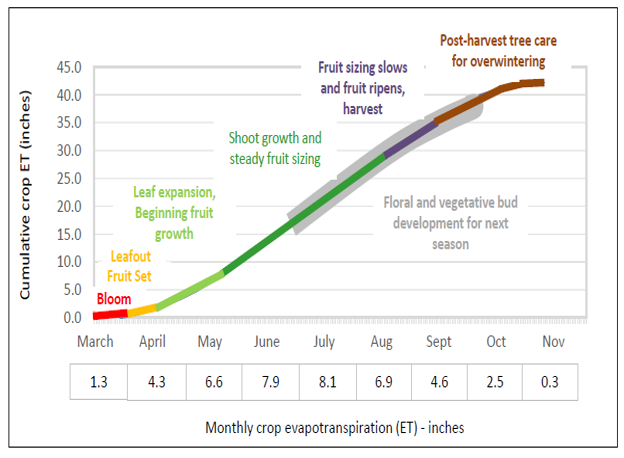 Illustrates the correlation between prune developmental phases and cumulative ET